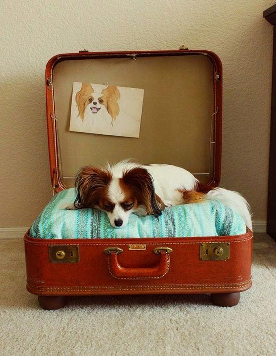 Cama para perro en una maleta