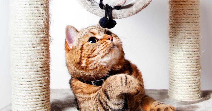 arbol rascador gato