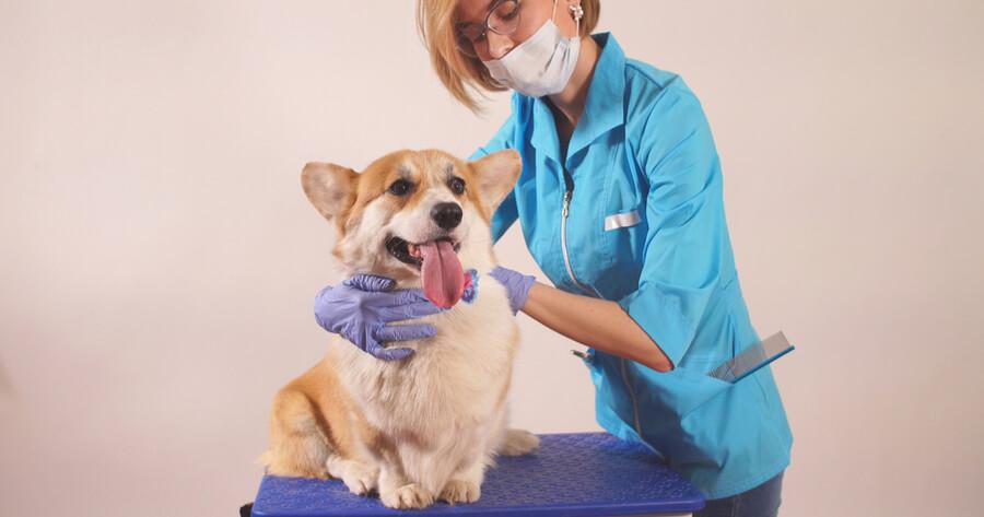 veteriniario tratando a un perro