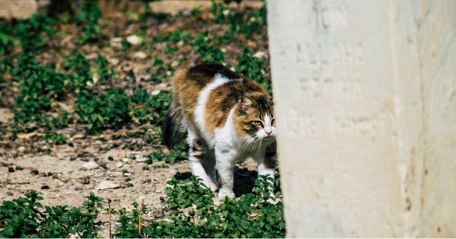 gato abandonado colonia felina