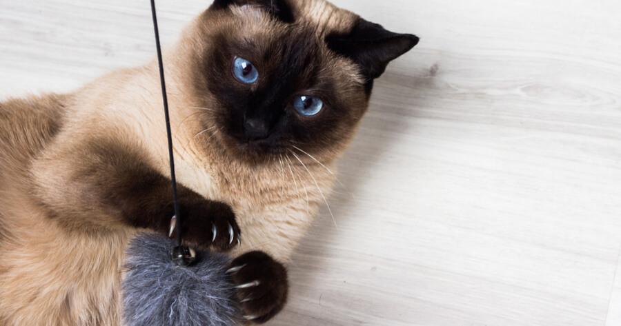 jugar con mi gato en casa