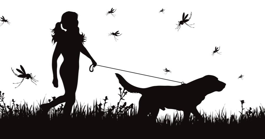 labrador detecta malaria