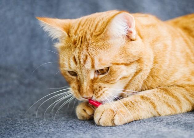 medicacion gato