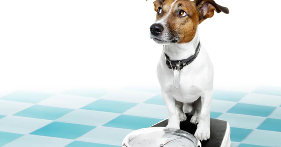 perro bascula peso