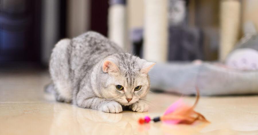 pluma flotante para gatos
