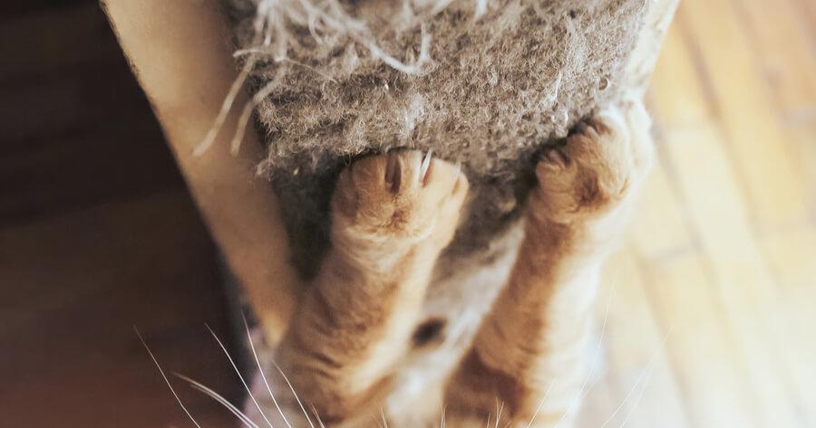 rascador vertical gatos