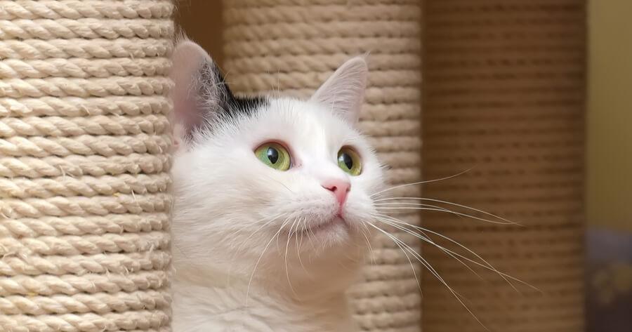 rascadores poste gatos