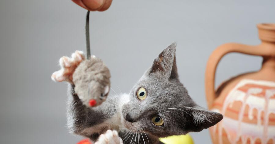 ratones de juguete gato
