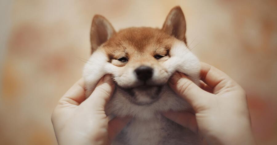 nombres de perro en japones