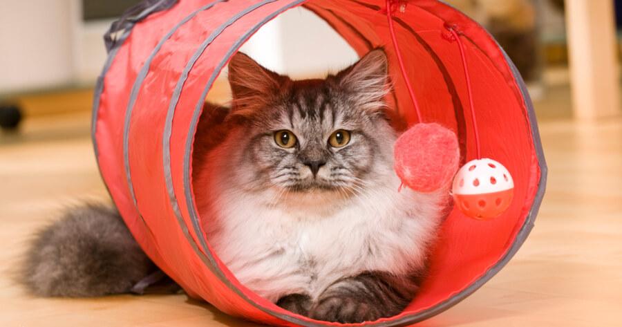 tunel para gatos