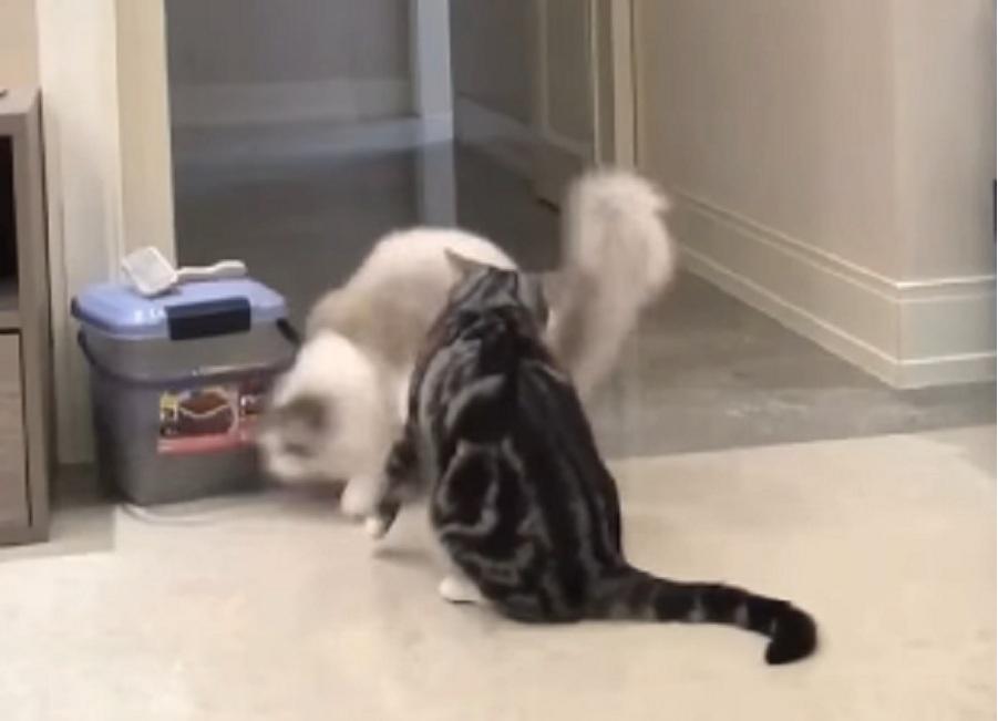 dos gatos juegan suelo cocina