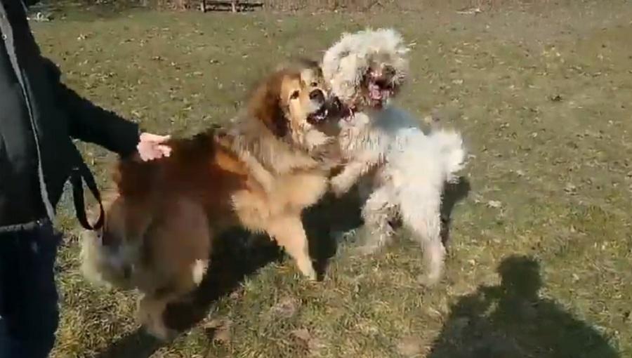 dos perros juegan en un cesped