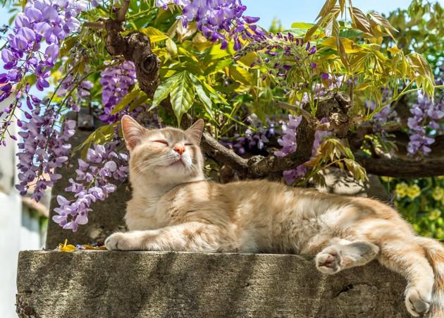 gato en el jardin
