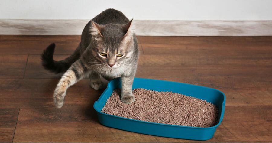 gato sale caja de arena