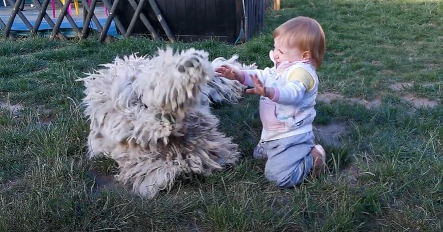 niño juega cesped perro raza komondor