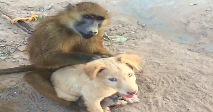 mono acicala perro