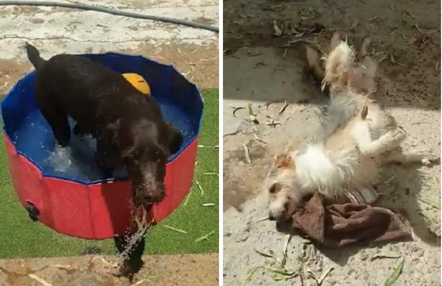 perro en la piscina y perro jugando en el suelo
