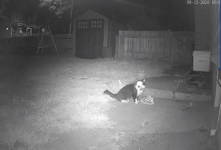 gato camara de seguridad