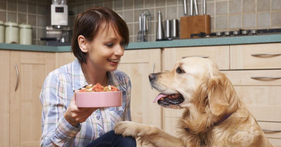 perro golden pidiendo comida