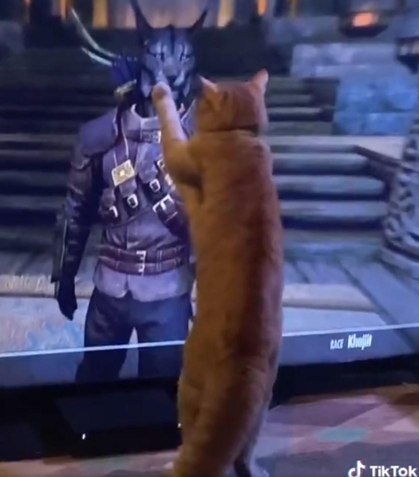 gato pelea lince