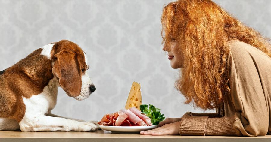 perro comiendo queso