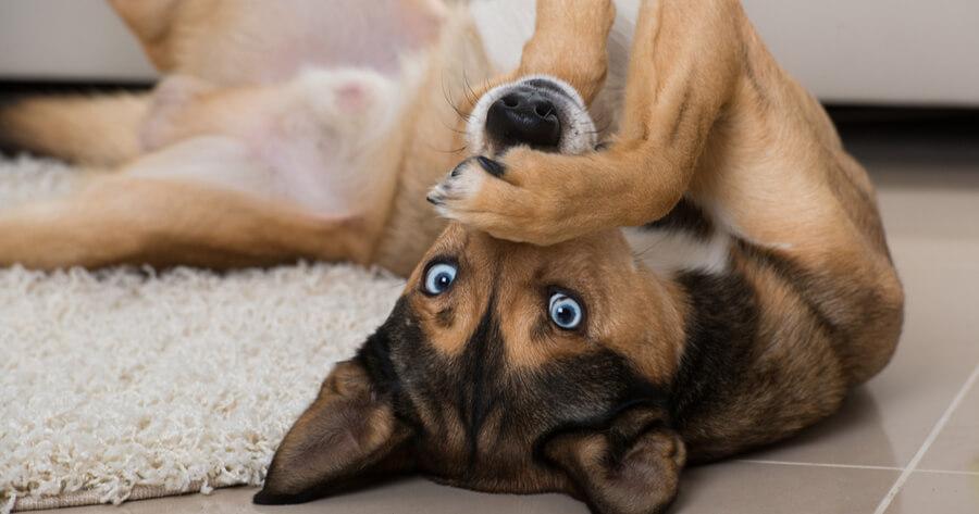 perro vigilando de espaldas