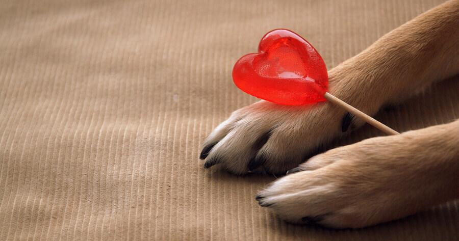 dia mundial corazon perros