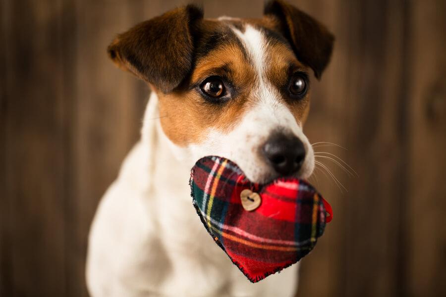 beneficios perros dia mundial corazon