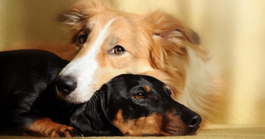 perros juntos abrazados