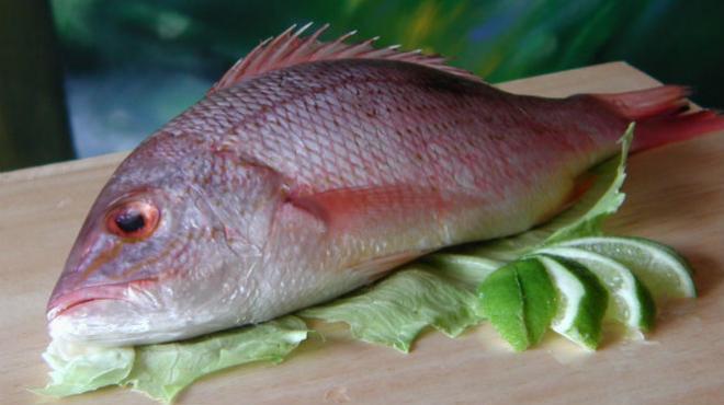 pescado crudo para gatos