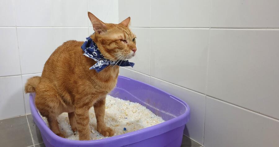 Arena de sílice gatos