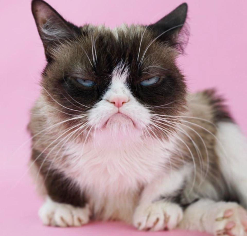 Grumpy Cat millonario
