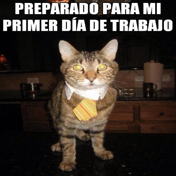 meme gato primer dia oficina