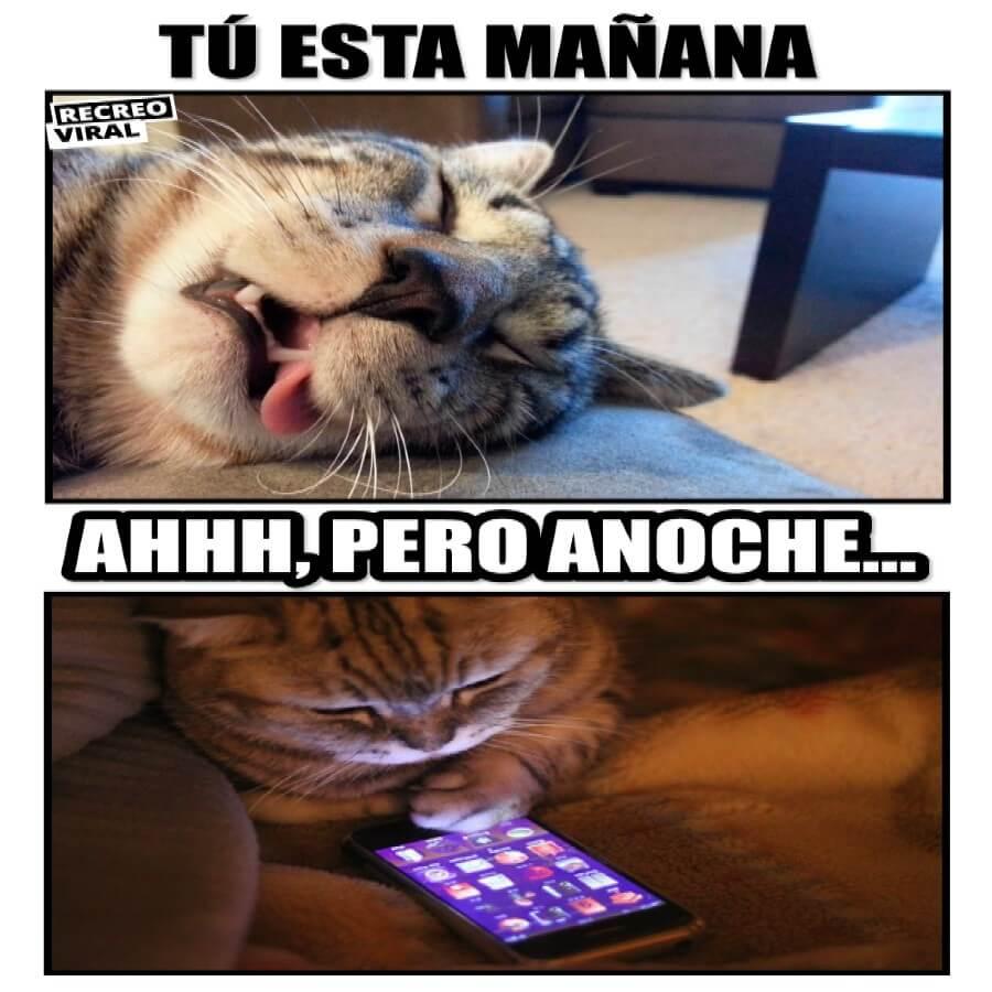 meme gato insomnio movil