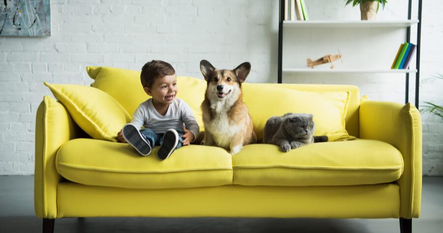 perro adoptado sofa