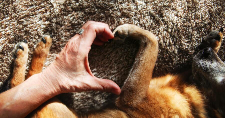 amor por mi perro
