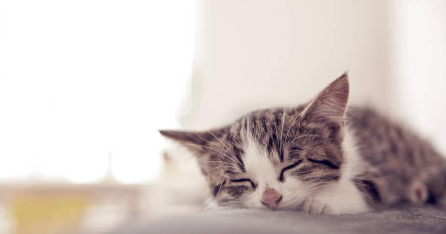 gato decaido y triste razones