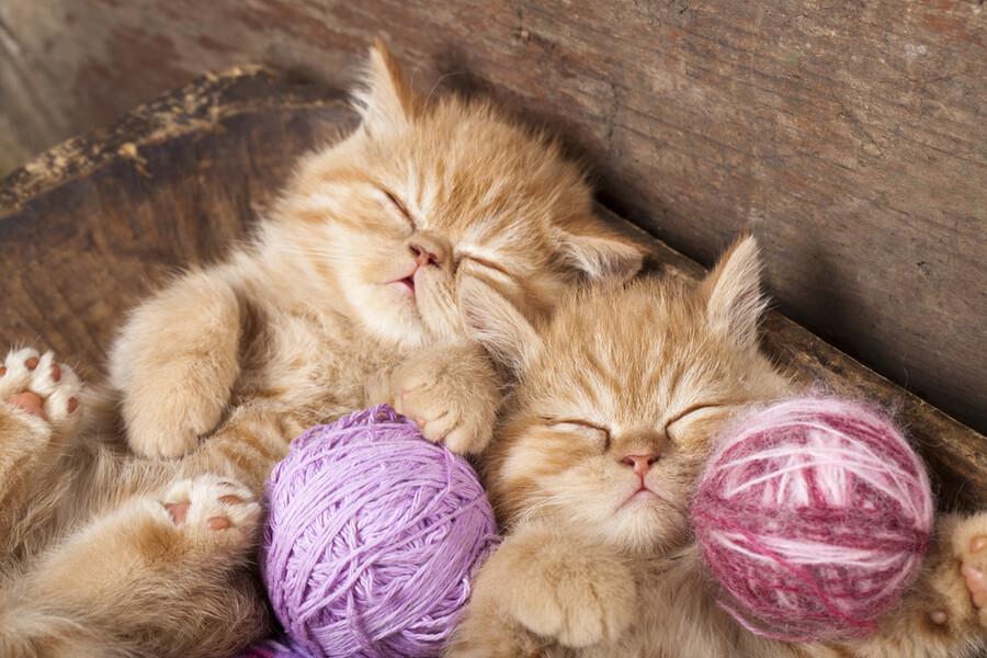 gatos exoticos amor