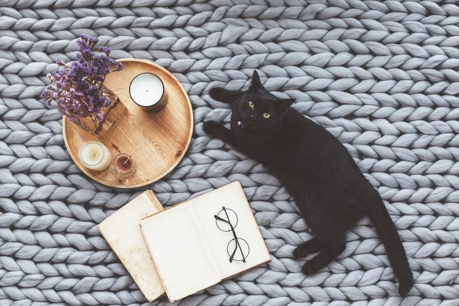 gato negro en la cama