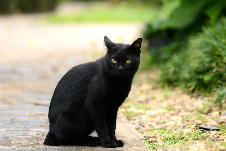 gato negro en la calle