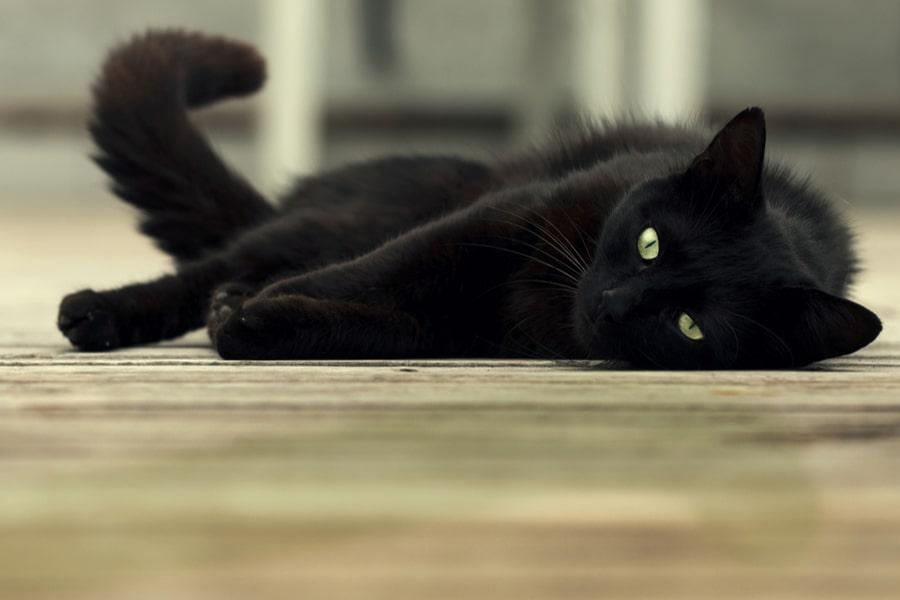 gato negro tumbado