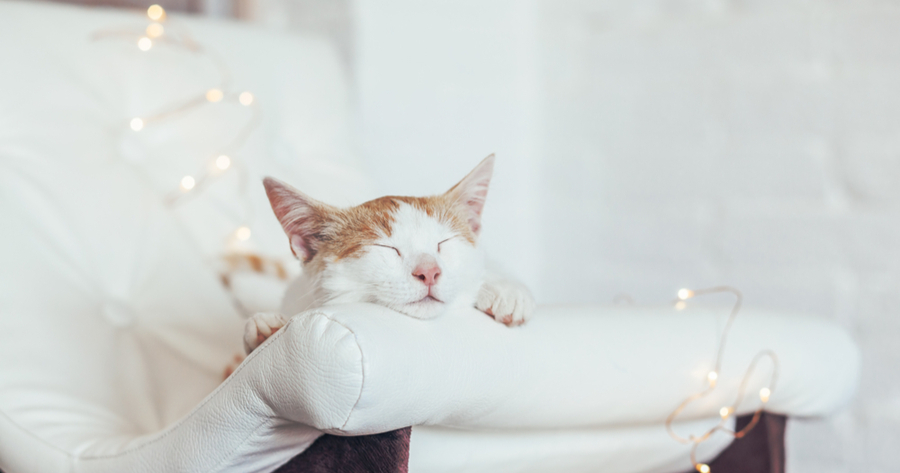 alzheimer gatos sintomas