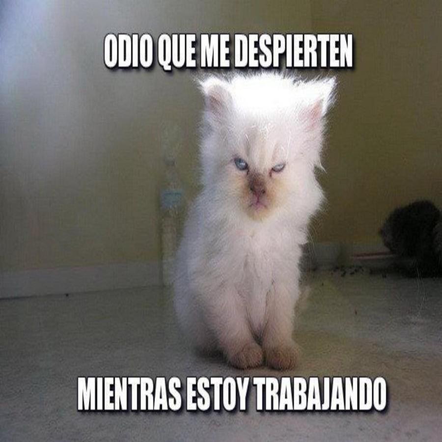 meme gato enfadado