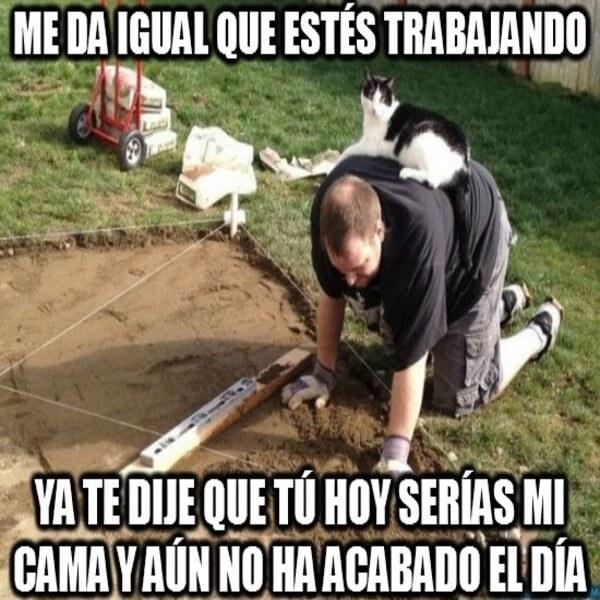 meme gato obliga trabajar humano