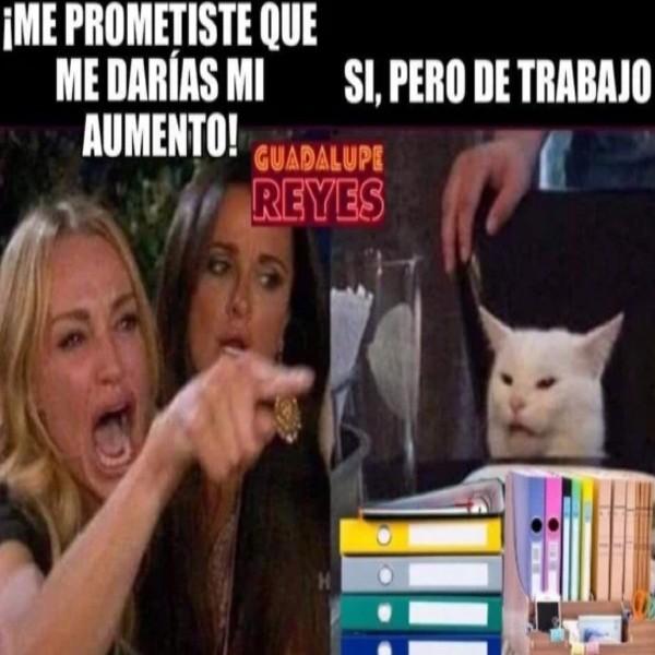 meme gato empresario