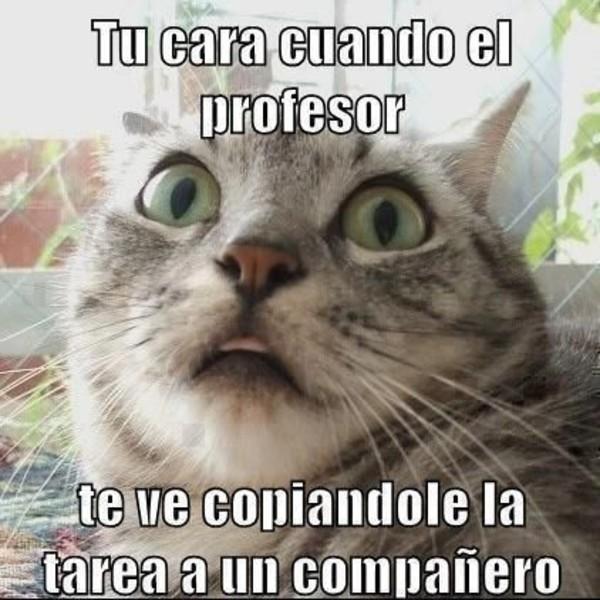 meme gato copiando examen