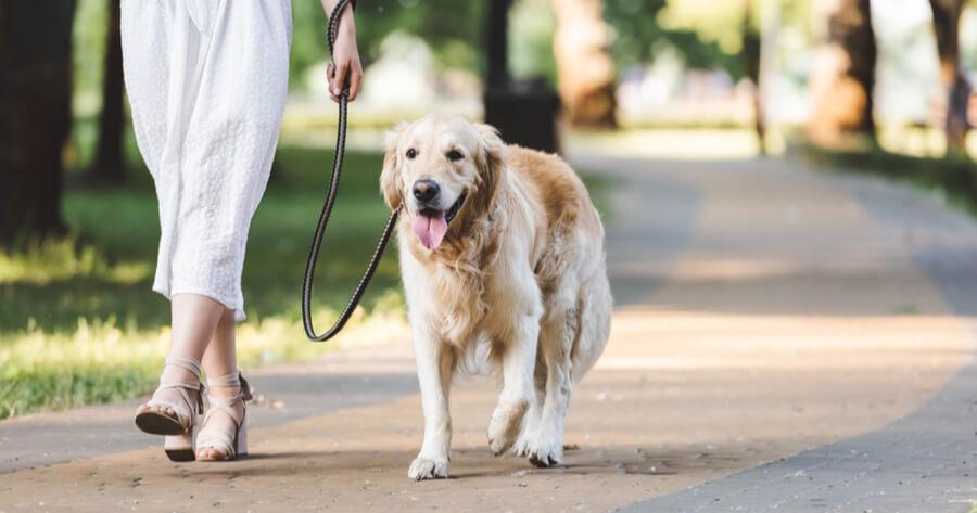pasear perro adoptado