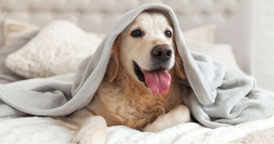 perro adoptado casa