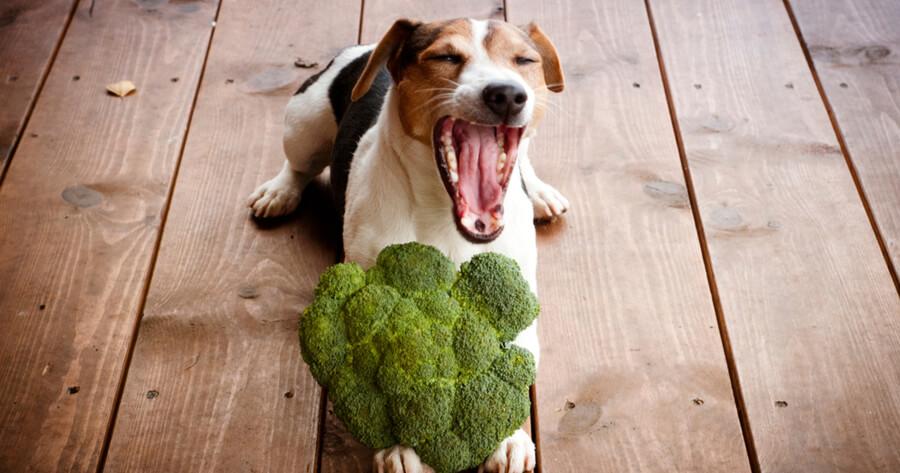 perro vegano