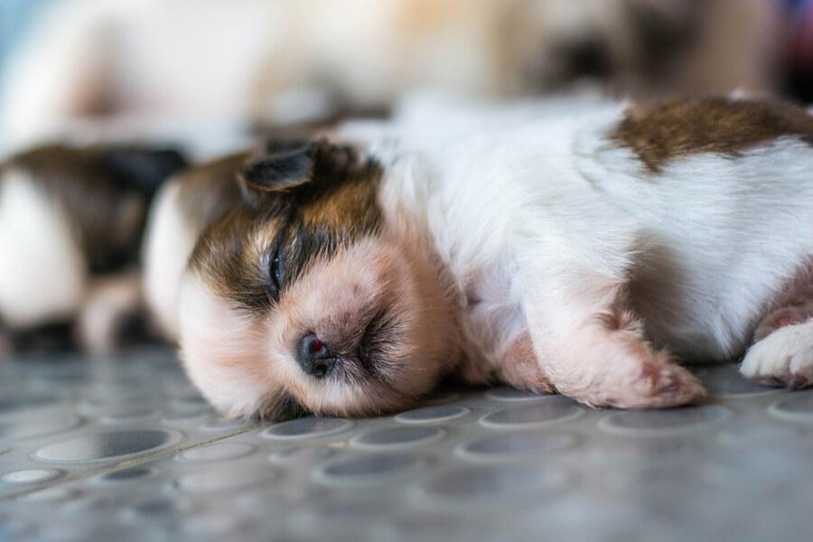 perro recien nacido